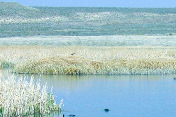pr-swan-lake